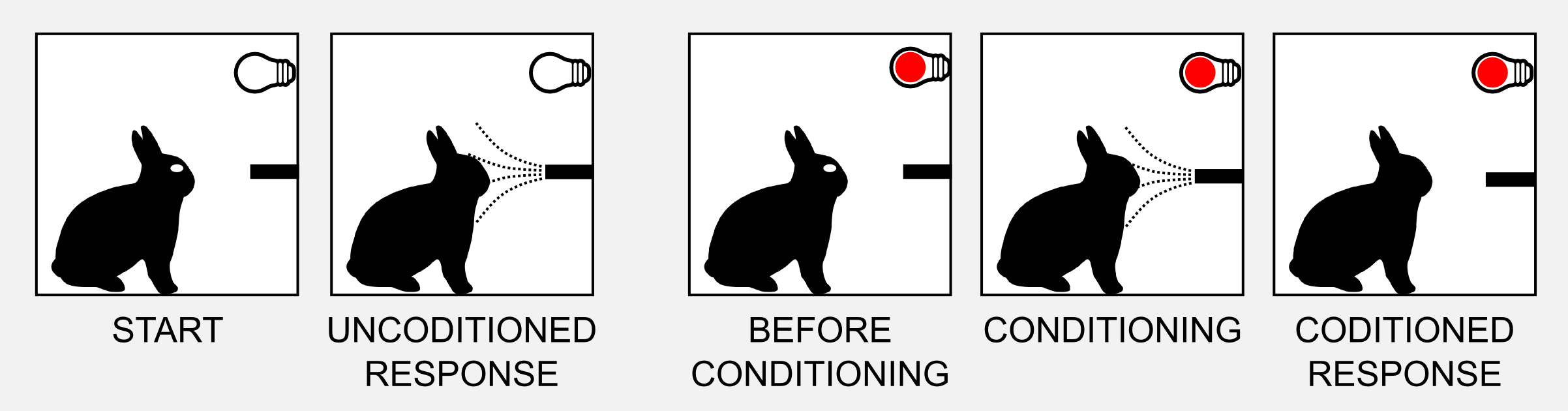 Eyeblinking Conditioning in Rabbits