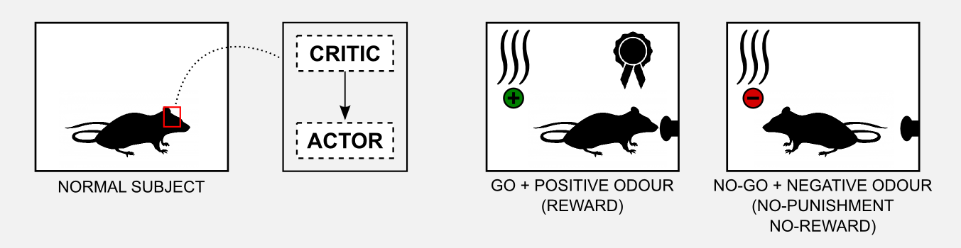 Reinforcement Learning Actor-Critic Go No-Go normal rats result