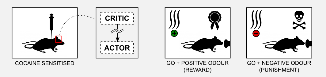 Reinforcement Learning Actor-Critic Go No-Go sensitised rats result